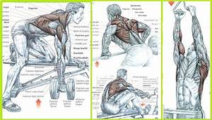 The Best Back Exercises For Mass Ufeff