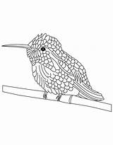 Hummingbird Coloring Pages Hummingbirds Chinned Drawing Printable Bird Adult Colouring Bee Butterflies Drawings Flowers Dragonflies Birds Popular Getdrawings Colorings Getcolorings sketch template
