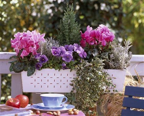 cuisiner la sauge le jardin en mode urbain quot ma maison mon jardin quot