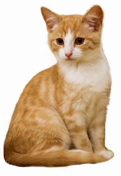Kitten Kat Pixabay Zitten Cat Rood
