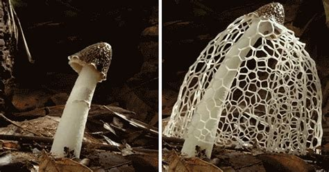 how do mushrooms grow 8 mesmerizing timelapse gifs showing how mushrooms grow bored panda