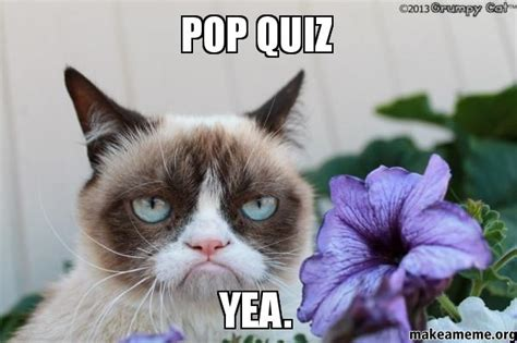 Quiz Meme - pop quiz yea make a meme