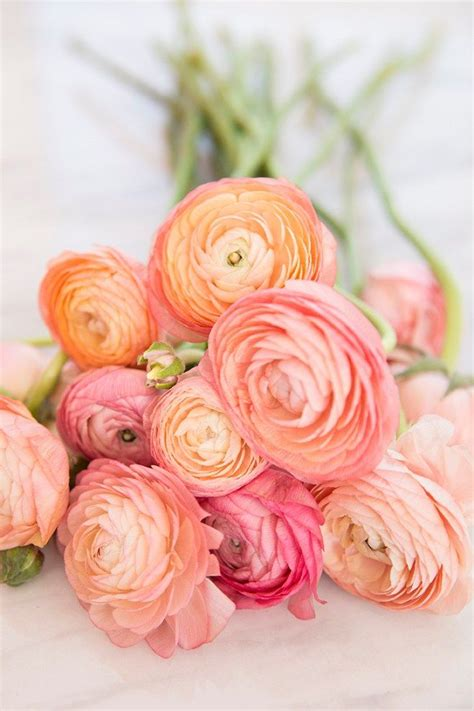 wedding flower power  radiant ranunculus bloooms