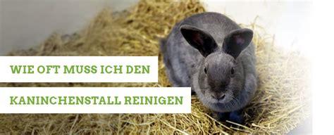 kaminofen reinigen wie oft kaninchenstallwelt damit es deine kaninchen gut haben