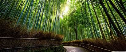 Bamboo Japan Forest Kyoto Wallpapers Ultrawide 4k