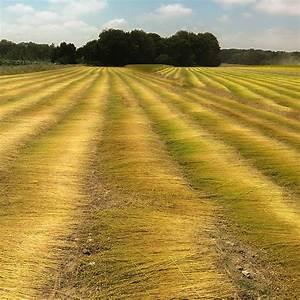 Linen, Fields
