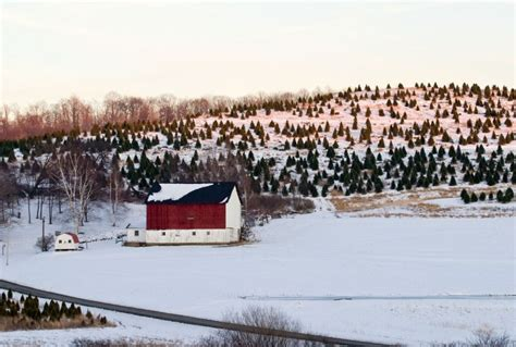 indiana county pa is christmas tree capital of the world