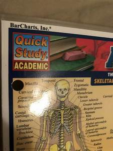 Anatomy Quick Study Academic Comprehensive Guide Laminated