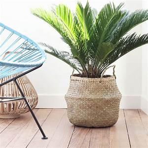 Palmen Für Drinnen : die besten 25 zimmerpflanze palme ideen auf pinterest ~ Michelbontemps.com Haus und Dekorationen