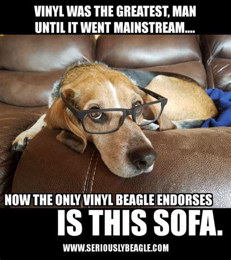 Beagle Memes - seriously beagle beaglelife