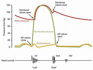 The Cardiac Cycle - Pressures In The Heart