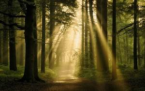 Landscape, Nature, Forest, Sun, Rays, Path, Trees, Mist, Atmosphere, Wallpapers, Hd, Desktop, And