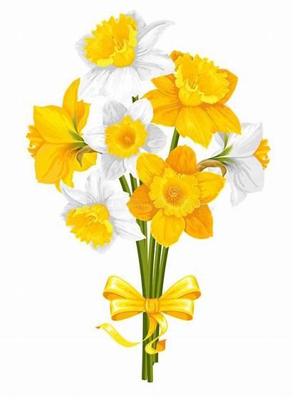 Flowers Daffodils Yellow Vector Spring Illustration Illustrations
