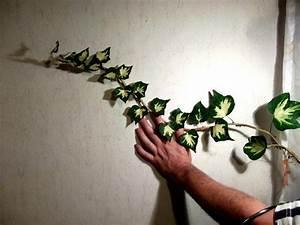 Efeu Sorten Winterhart : efeu goldherz heckenpflanzen bl hend winterhart immergr n ~ A.2002-acura-tl-radio.info Haus und Dekorationen