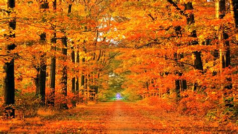 Fall Wallpapers Hd