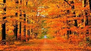 autumn path | Soapin'spiration! | Pinterest | Fall desktop ...