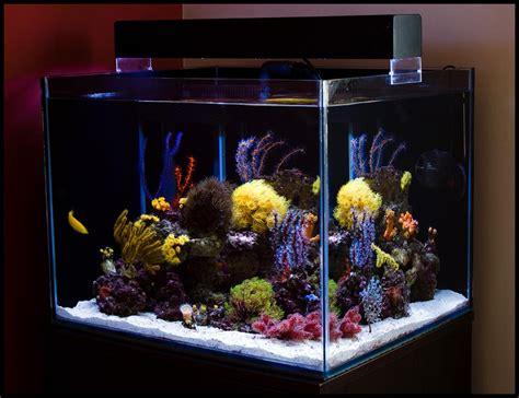 gallon long aquarium specifics aquarium design ideas