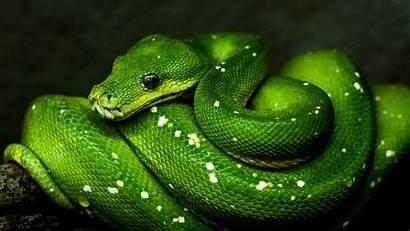 Snake Reptile 4k Wildlife Uhd