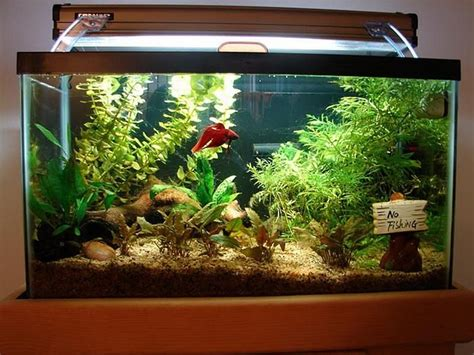 Decorating Ideas For Fish Tank by Fish Tank Decoration Ideas Aquatic Fish Tank Decoration