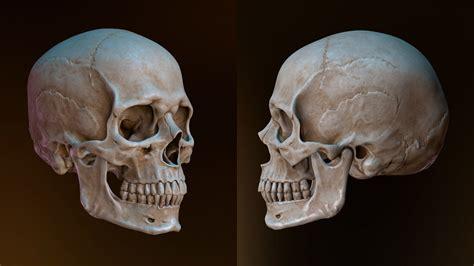 mdl sh baad jmjmh ansan human skull mghzabzar