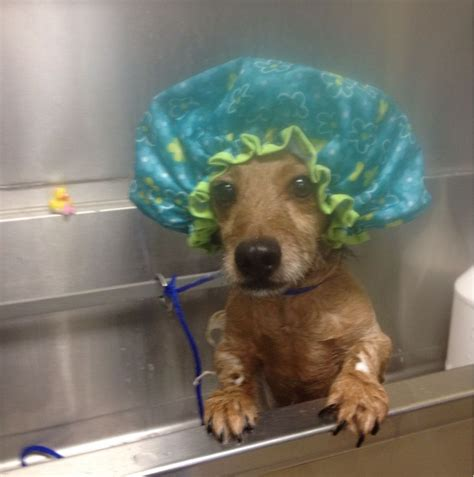 Pictures Only Dachshund Owners Will Think Are Funny