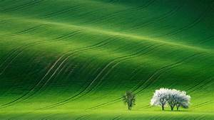 Wallpaper Grassland  Landscape  Green  Huawei Mediapad M5