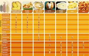 Comment utiliser les différentes variétés de Pommes de terre ? La recette facile par Toqués 2