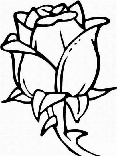 Rosen Ausmalbilder Ausdrucken Malvorlagen Kostenlos Blumen Rose