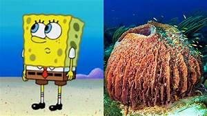 Debate rages about whether Spongebob is a sea sponge or a ...
