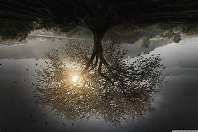 Divergent Insurgent Tree Series Wallpapers Wide Kong