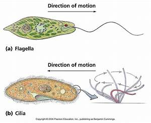 Biology Pictures  Cell Biology