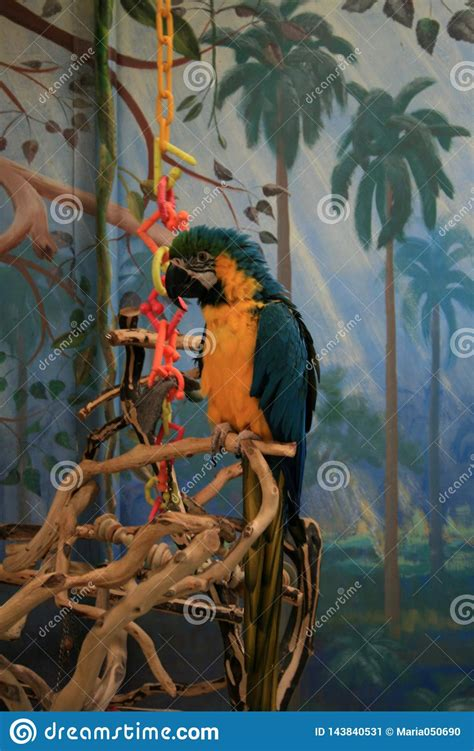 Addresses, phone numbers, reviews and other information. Macaw In A Pet Store In Denver. Stock Image - Image of ...