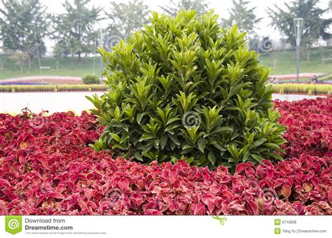 colorful bushes and shrubs colorful plants in park royalty free stock image image 6710836