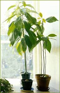 Plantes Exotiques D Intérieur : les plantes exotiques ~ Melissatoandfro.com Idées de Décoration
