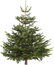 the cheapest places to buy a real christmas tree this year mirror online