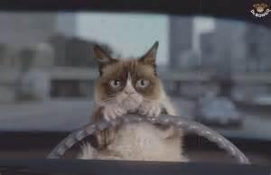 road trip cat a road trip