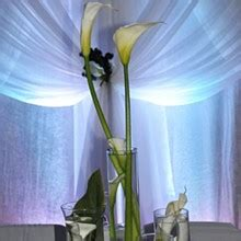 celebrity event decor flowers jacksonville fl