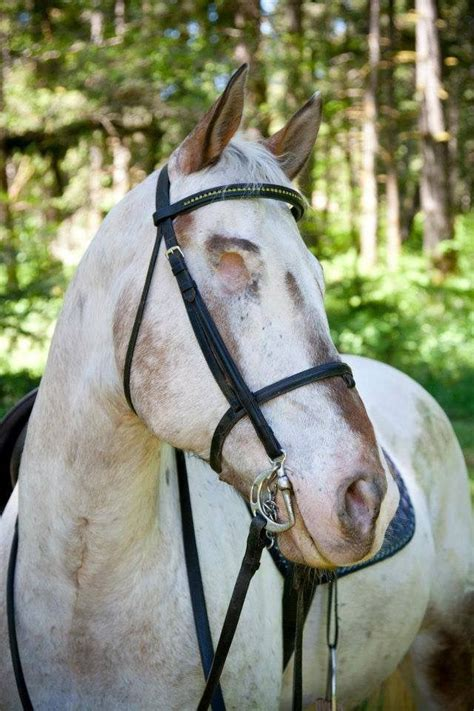 blind horse unusual animals horses riding stables endo uploaded user things