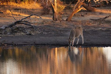 Interesting Facts About South Africa Mapungubwe Sunset