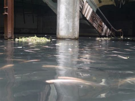 exotic fish   abandoned bangkok mall basement