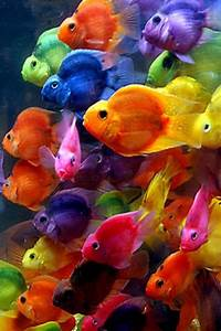 Colorful Fish iPhone Wallpaper | iPhone Wallpapers 4 ...