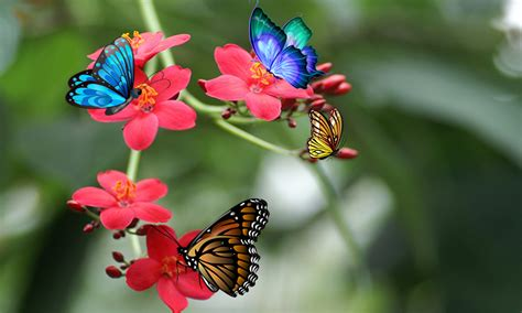 3d Wallpapers Butterfly by 3d Butterfly Live Wallpaper Android Apps On Play