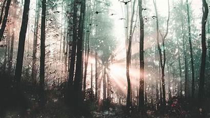 Fog Birds Forest Mystical Trees Widescreen Tablet