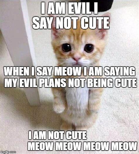 Cate Meme - cat cute meme www pixshark com images galleries with a bite