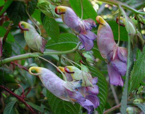 plant with like flowers 33 best images about parrot flowers on pinterest exotic flowers flower paintings and flower