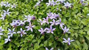 Welche Pflanzen Vertragen Sich Tabelle : bodendecker gegen unkraut welche pflanzen eignen sich daf r ~ Lizthompson.info Haus und Dekorationen