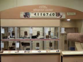 petco cat adoption petco cat adoption center