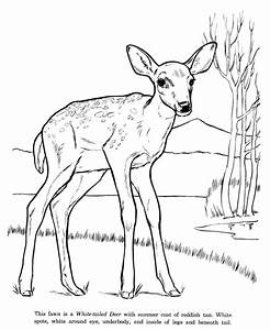 Coloring Pages: Animal Drawings Coloring Pages | White ...