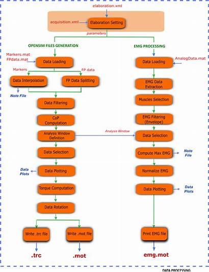 Processing Flowchart Steps Elaborate Trials Dynamic