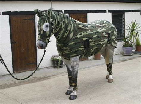 equine fashion statements horse nation